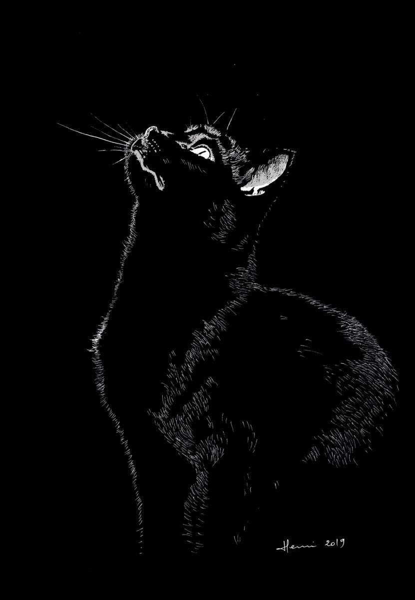 Dessin, drawing, ink, dessin plume, encre de Chine, Henri Blanc, cat, chat