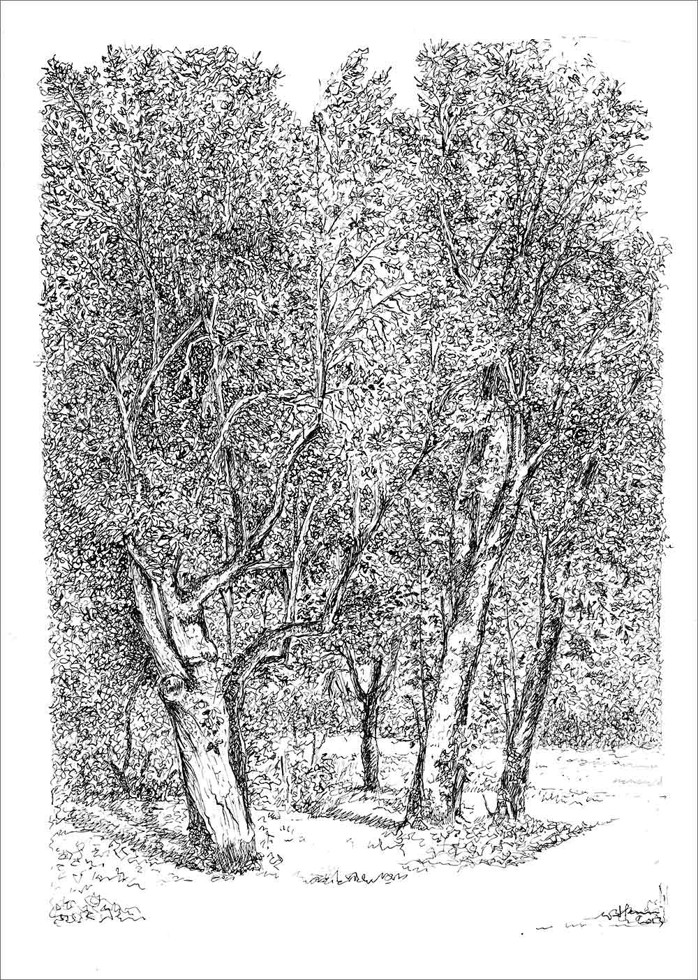 Henri Blanc dessins à la plume - Frissons d'ete Saint-Pompon tree ink drawing