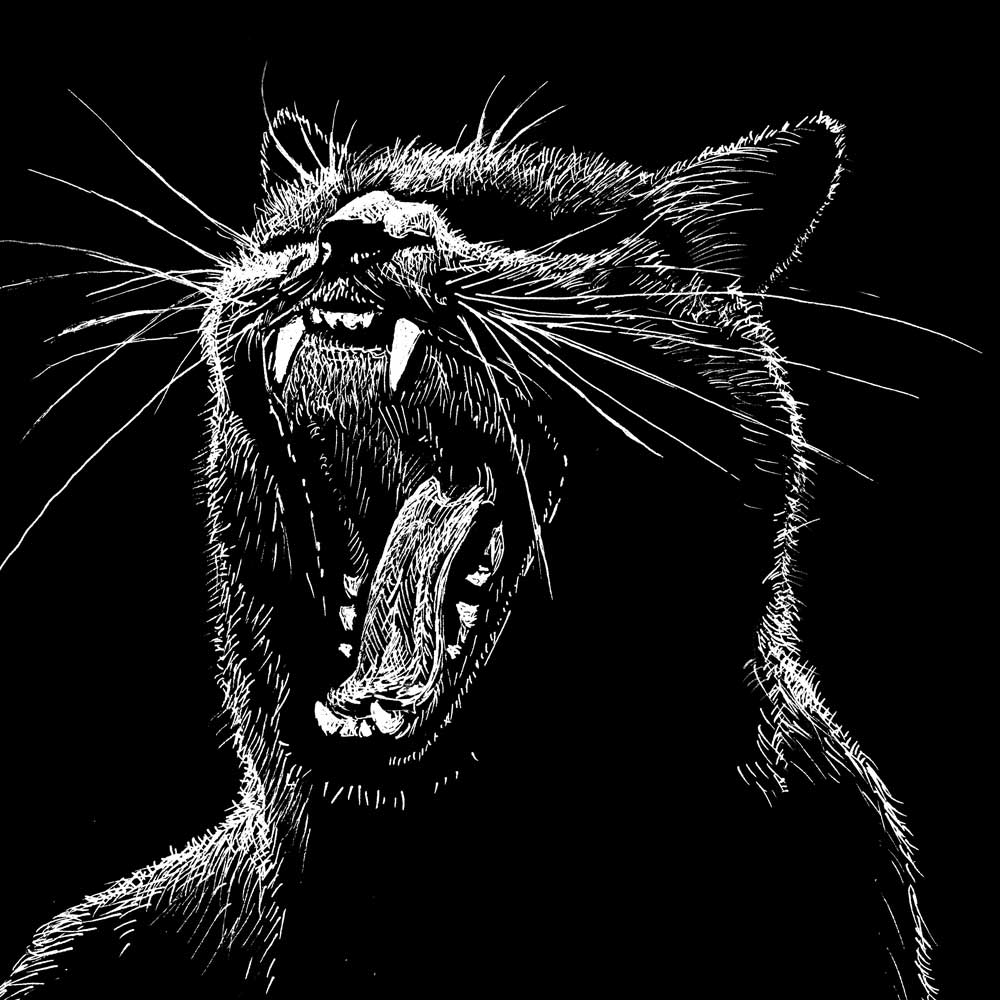 Dessin, drawing, ink, dessin plume, encre de Chine, Henri Blanc, chat, cat