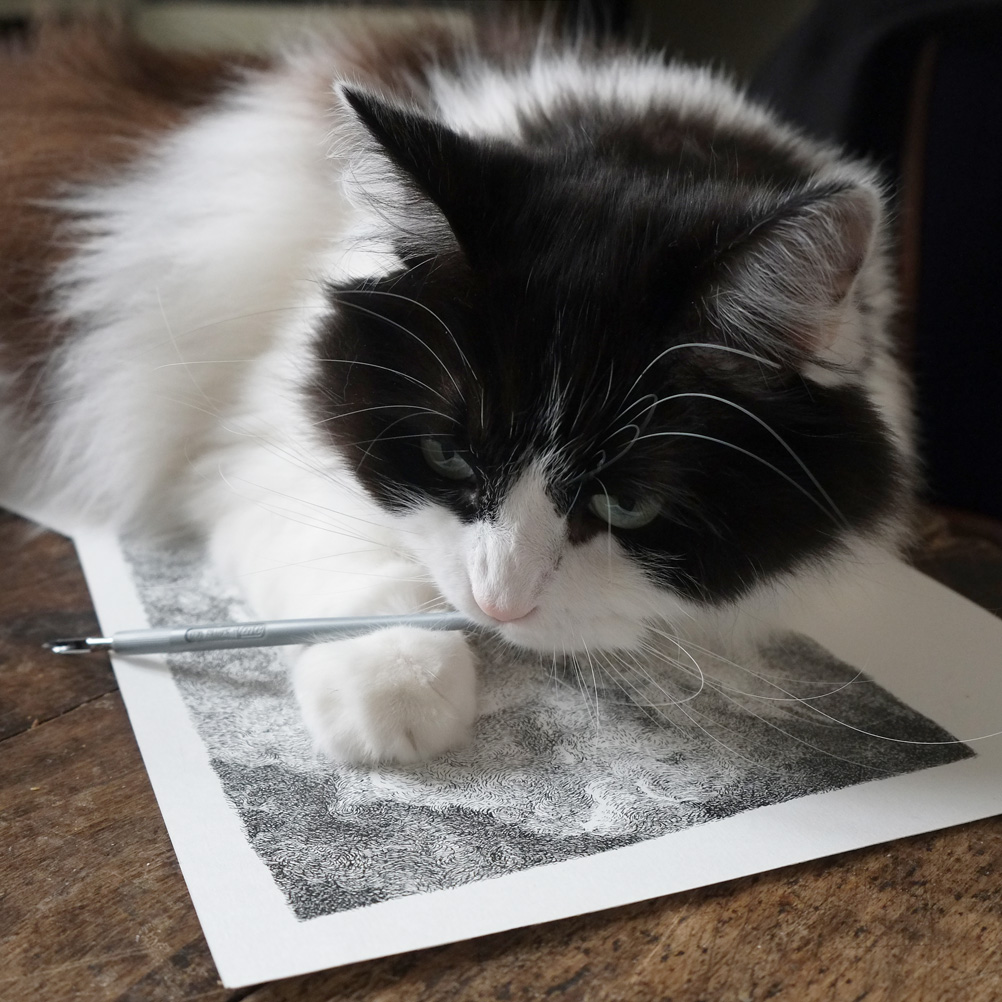 Henri Blanc, drawing, dessin, plume, ink, funny cat