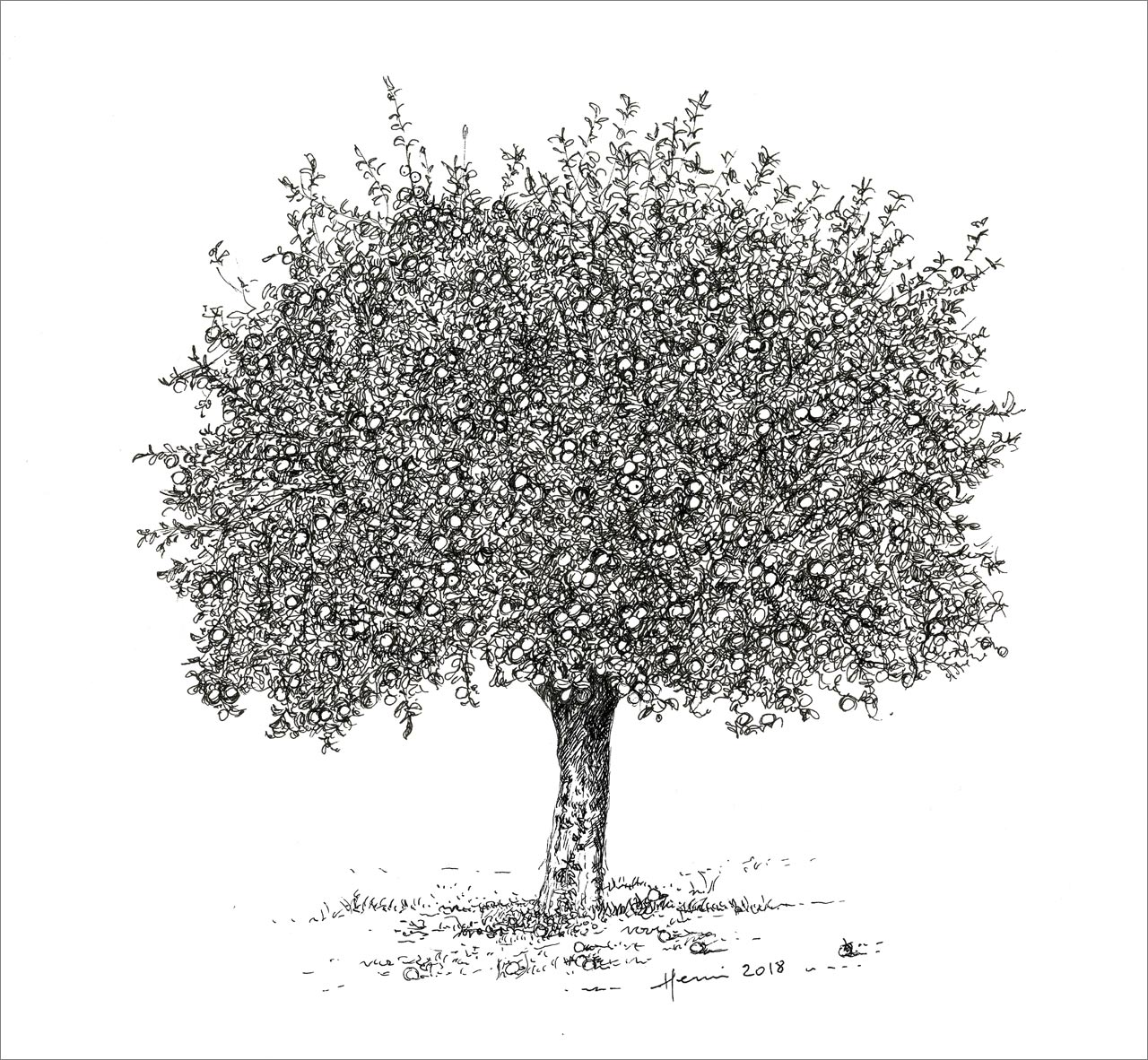Drawing Henri Blanc, Dessin, plume, ink, encre de chine, tree, arbre, pommier, apple-tree,