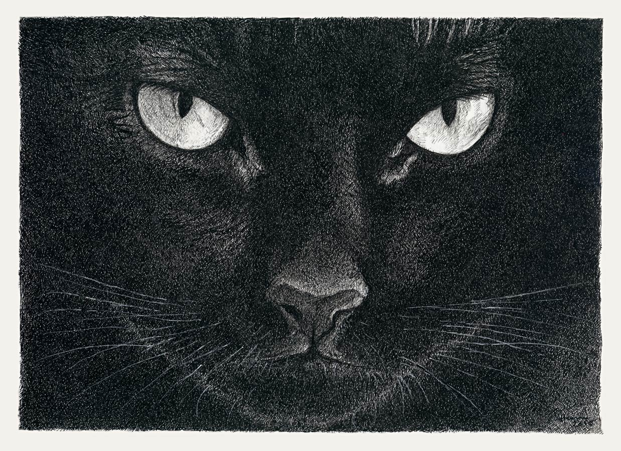 Henri Blanc dessins à la plume - Le regard d'Arnold chat cat ink drawing