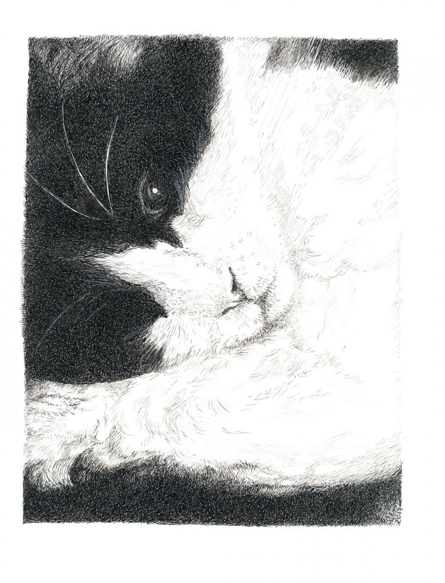 cat, chat, dessin, plume, drawing, ink, henri blanc