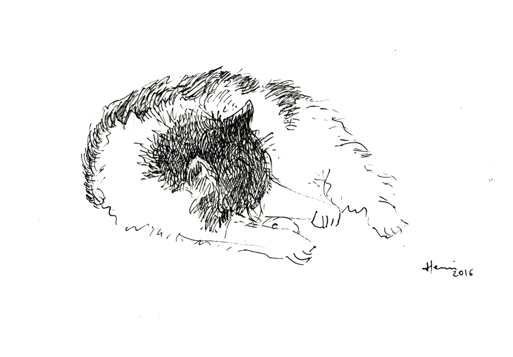henri Blanc dessins à la plume - 36° à l'ombre ink drawing chat cat