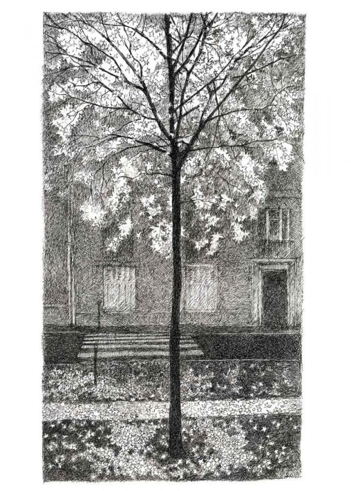 arbre, tree, drawing, ink, henri blanc, dessin, plume, Paris, Montmartre