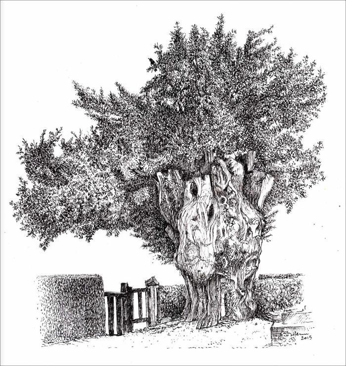 Henri Blanc dessins à la plume - Le vieil if de Freneuse tree ink drawing