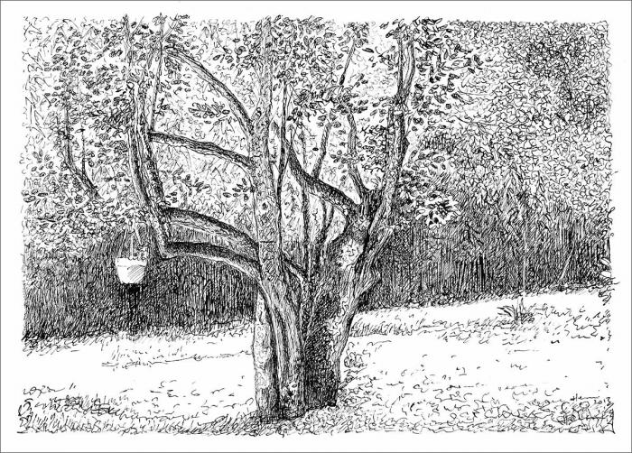 Henri Blanc dessins à la plume - L'arbre qui s'enlace Saint-Pompon tree ink drawing