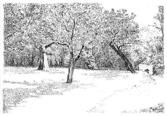 Henri Blanc dessins à la plume - L'entree aux noyers Saint-Pompon tree ink drawing