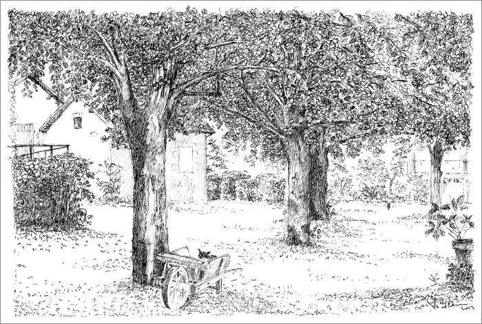 Henri Blanc dessins à la plume - Les tilleuls gardiens Saint-Pompon tree ink drawing