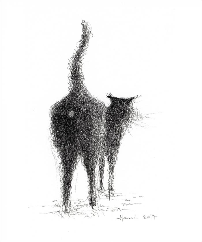 dessin henri blanc, drawing ink, dessin chat, drawing cat, cat, plume encre de Chine, encre de Chine