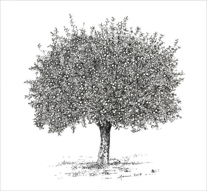 Drawing Henri Blanc, Dessin, plume, ink, encre de chine, tree, arbre, pommier, apple-tree,