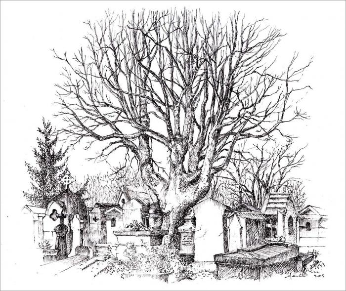 Henri Blanc dessins à la plume - tree ink drawing cimetiere Montmartre Paris arbre