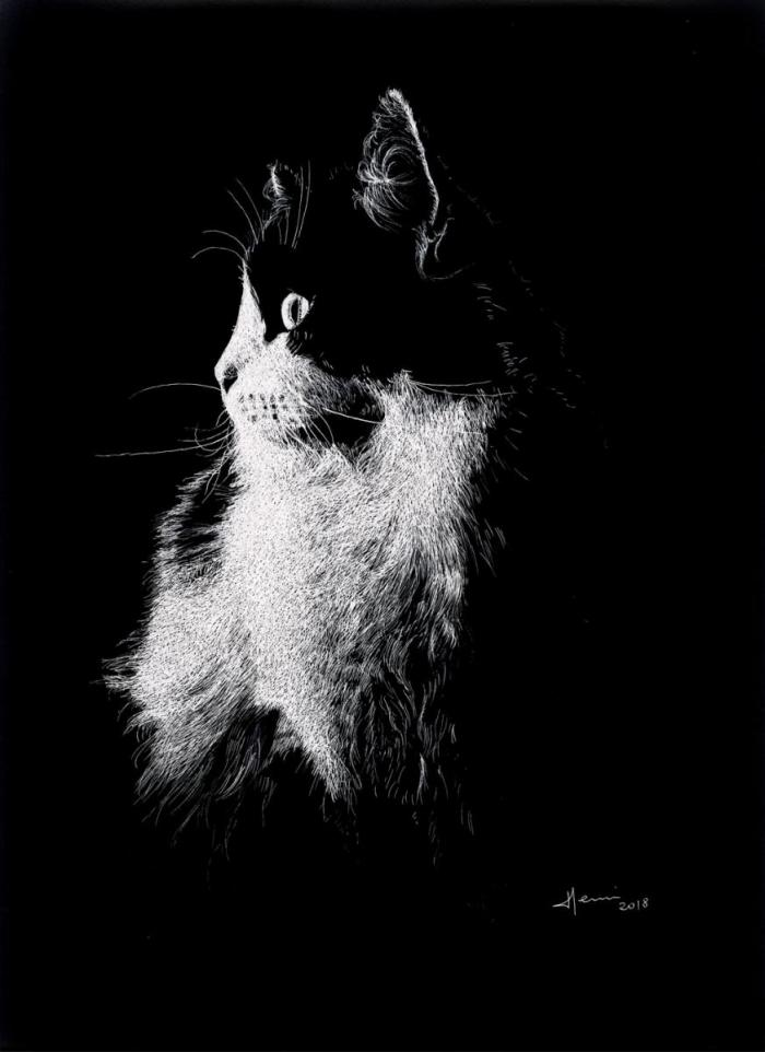 Drawing Henri Blanc Dessin plume ink encre de chine chat cat